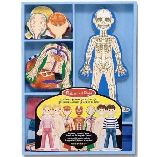 Magnetic Anatomy Play Set