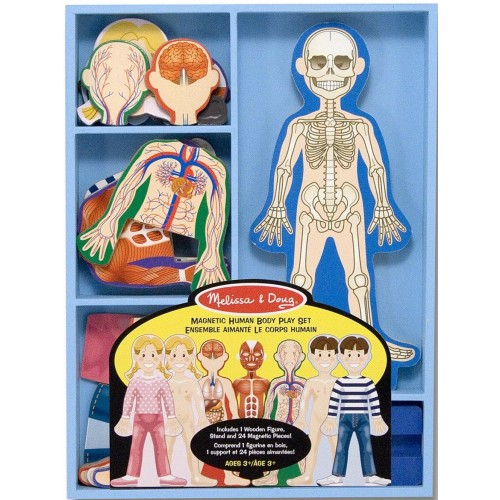Magnetic Anatomy Play Set